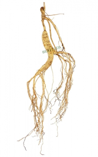 High Grade 15-year-old Wild Organic Ginseng Root * Free Shipping